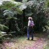 A Local Look @ NSW Hiking Trails