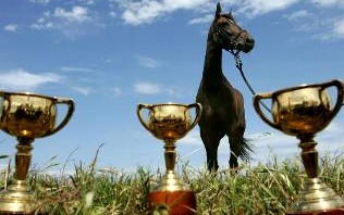 Melbourne Cup Winner