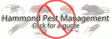 Pest Control Jindabyne