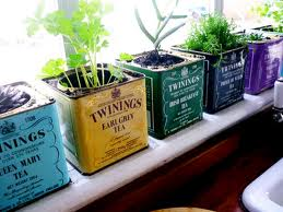 plant veggie garden sydney balcony window