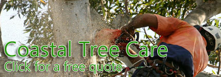 Tree Lopping Central Coast