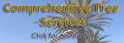 TREE Services Lane Cove
