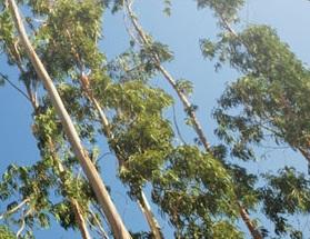 Tree Surgeon Sydney NSW
