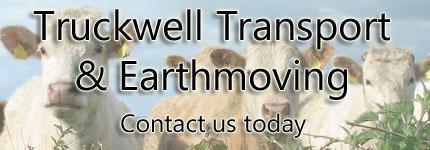 Sheep Transport Longreach