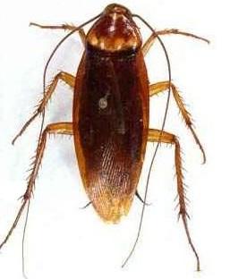 Pest Control Fawkner