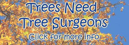 Tree Surgeons Bibra Lake