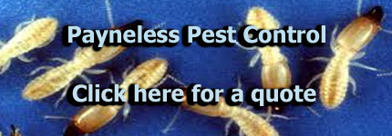 Termite Extermination Eastern Suburbs