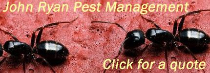 Termite Inspection Kingaroy