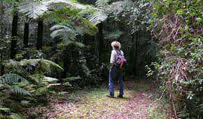 hiking nsw sydney trail bush walk easy