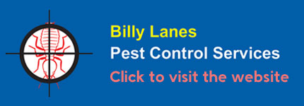 Termite Inspections Wollongong