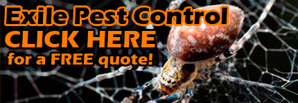 Pest Removal North Lakes
