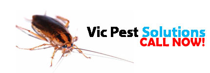 Pest Control Bentleigh