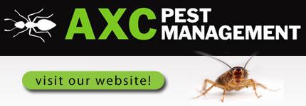 Termite Control Tweed Heads