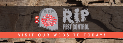Termite Inspections Dee Why