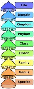 biological-classification-taxonomy