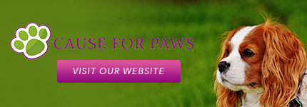 Dog Obedience Training Randwick